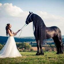 Picture of Horse Park Kamenny Dvur